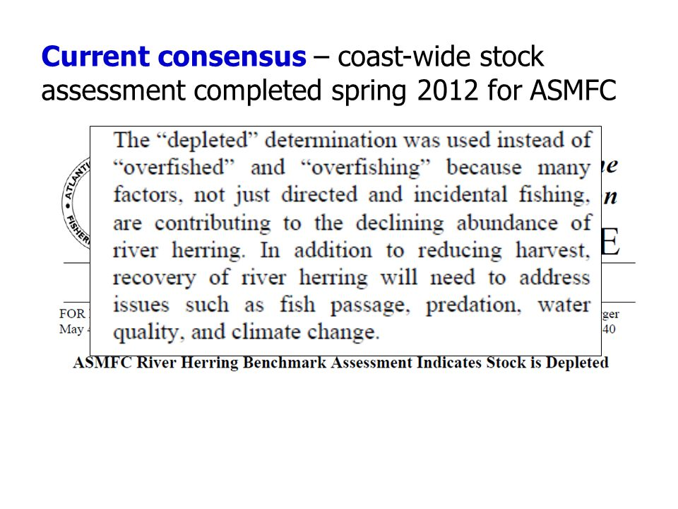 Current consensus – coast-wide stock assessment completed spring 2012 for ASMFC