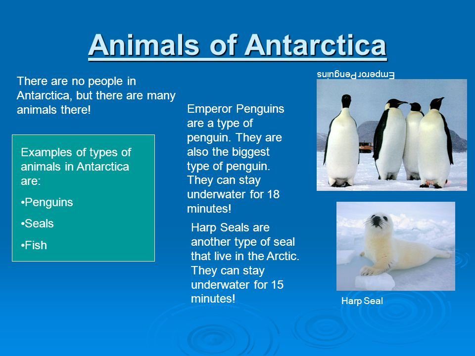 Animals of Antarctica There are no people in Antarctica, but there are many animals there! Examples of types of animals in Antarctica are: Penguins Se