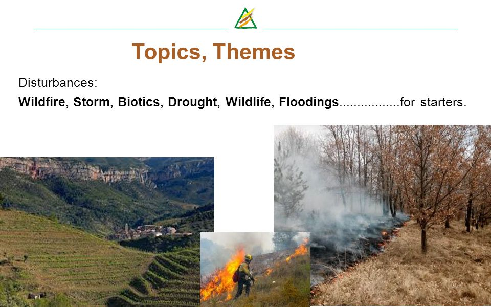 http://www.eficent.efi.int/portal/projects/european_forest_risk_facility/ frisk-go@efi.int Topics, Themes Disturbances: Wildfire, Storm, Biotics, Drou