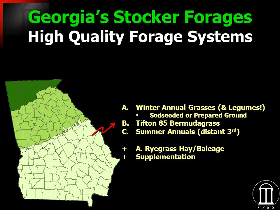 Georgias Stocker Forages High Quality Forage Systems A.Winter Annual Grasses (& Legumes!) Sodseeded or Prepared Ground B.Tifton 85 Bermudagrass C.Summer Annuals (distant 3 rd ) +A.