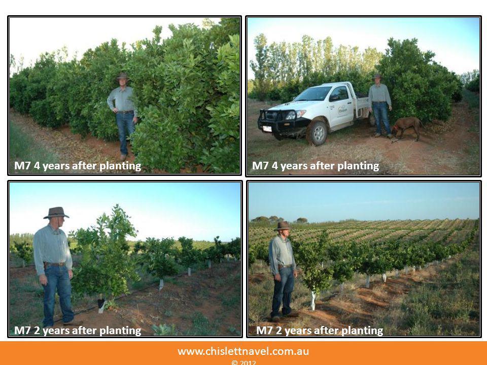 M7 4 years after planting M7 2 years after planting www.chislettnavel.com.au © 2012