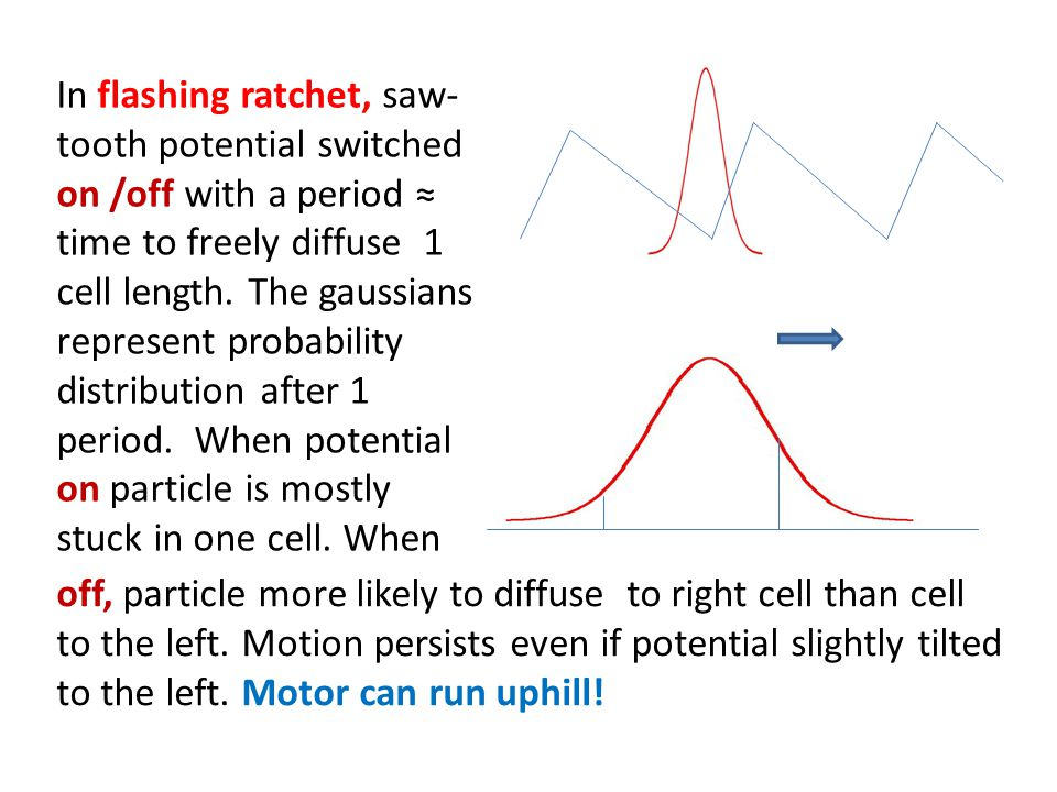In flashing ratchet, saw- tooth potential switched on /off with a period time to freely diffuse 1 cell length.