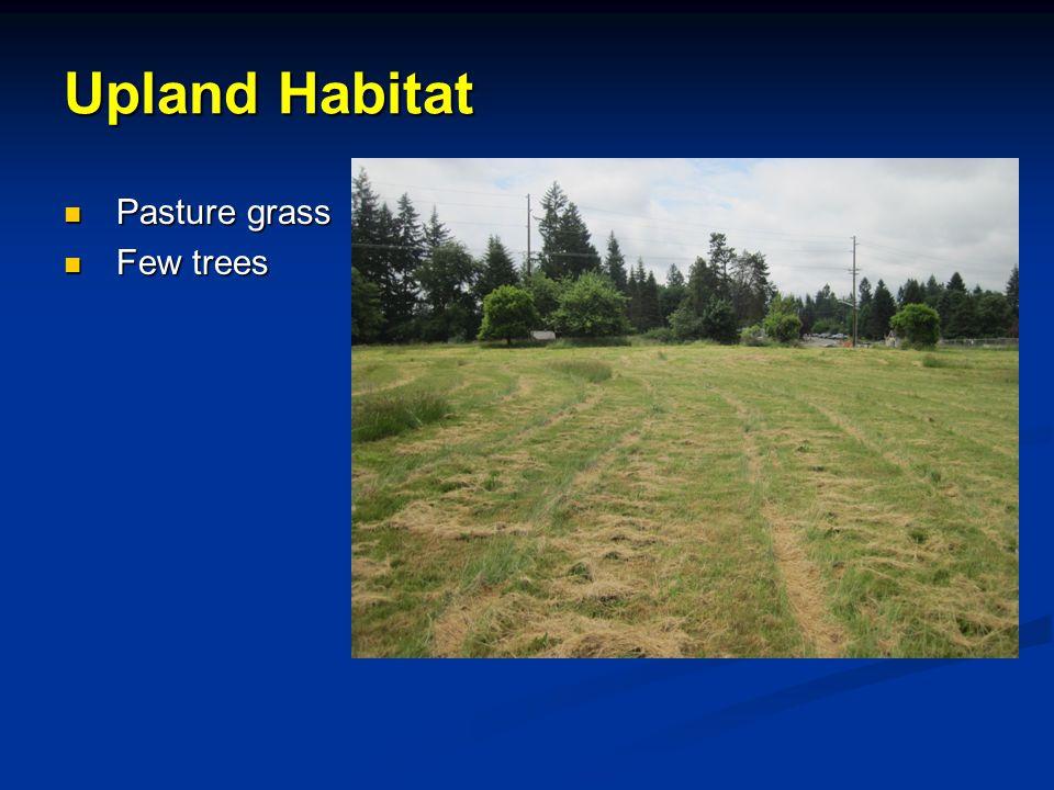 Pasture grass Pasture grass Few trees Few trees Upland Habitat