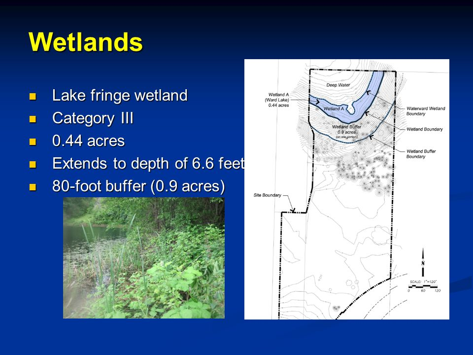 Lake fringe wetland Lake fringe wetland Category III Category III 0.44 acres 0.44 acres Extends to depth of 6.6 feet Extends to depth of 6.6 feet 80-foot buffer (0.9 acres) 80-foot buffer (0.9 acres)Wetlands