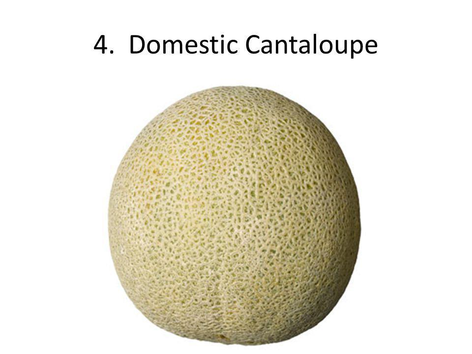 4. Domestic Cantaloupe