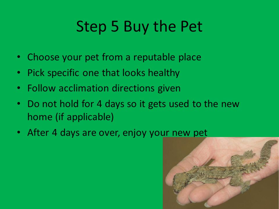 Step 4 Prepare If you are allowed to get the pet, do this first – Buy supplies – Prepare home for pet – Check if everything is correct for it
