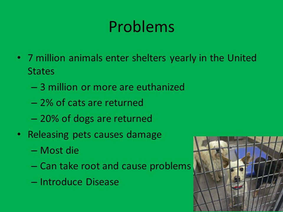 Problems 7 million animals enter shelters yearly in the United States – 3 million or more are euthanized – 2% of cats are returned – 20% of dogs are returned Releasing pets causes damage – Most die – Can take root and cause problems – Introduce Disease