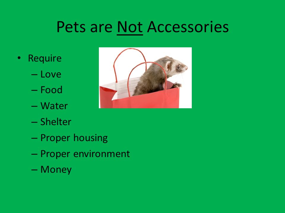 Step 5 Buy the Pet Choose your pet from a reputable place Pick specific one that looks healthy Follow acclimation directions given Do not hold for 4 days so it gets used to the new home (if applicable) After 4 days are over, enjoy your new pet