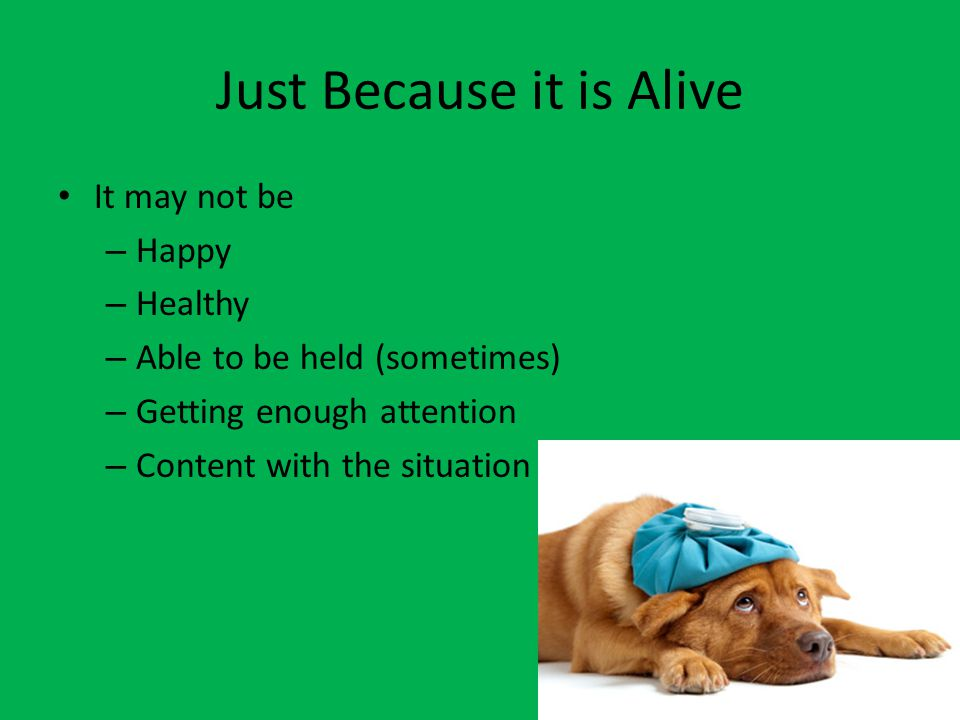 Just Because it is Alive It may not be – Happy – Healthy – Able to be held (sometimes) – Getting enough attention – Content with the situation