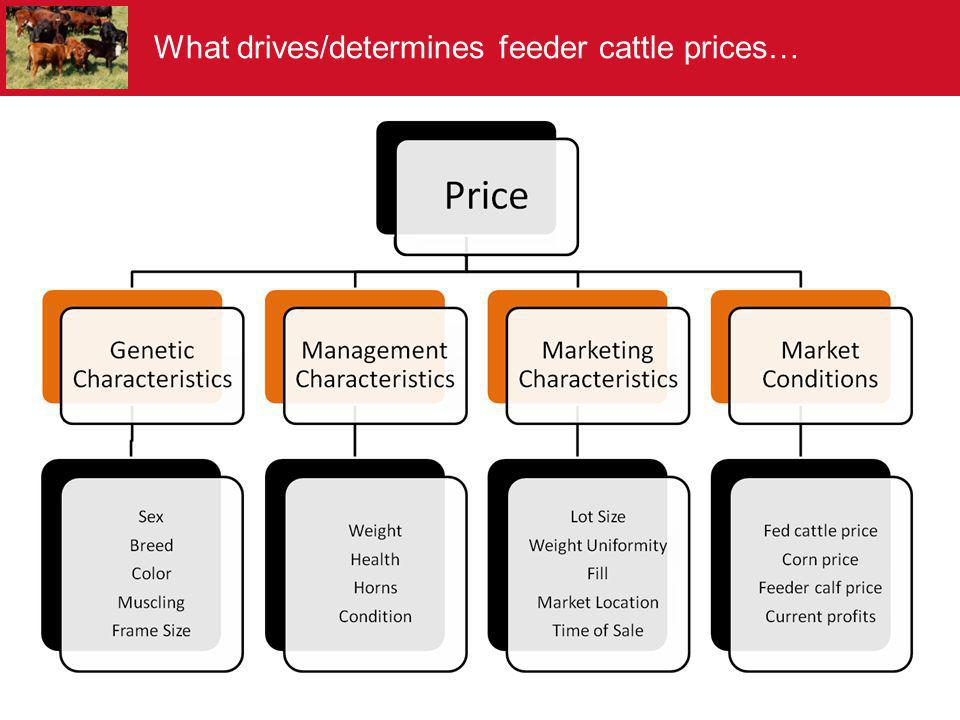 What drives/determines feeder cattle prices…