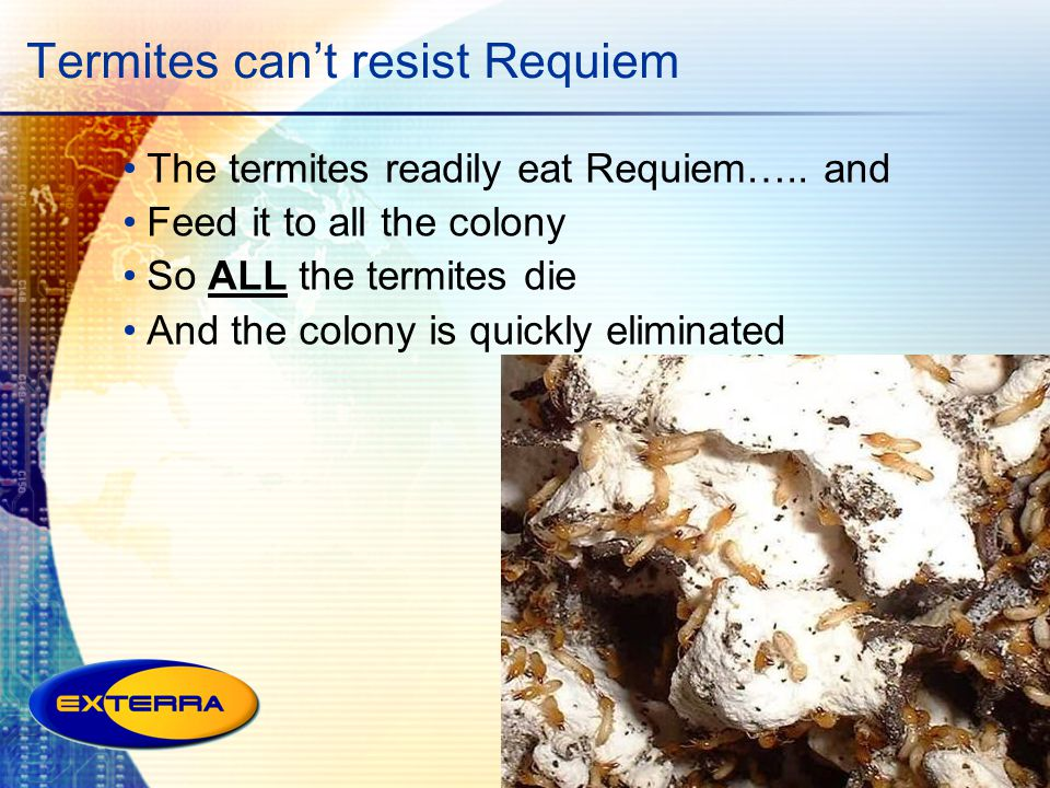 Termites cant resist Requiem The termites readily eat Requiem….. and Feed it to all the colony So ALL the termites die And the colony is quickly elimi