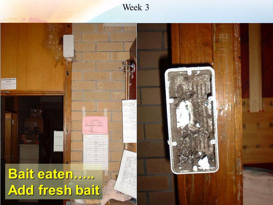 Week 3 Bait eaten….. Add fresh bait