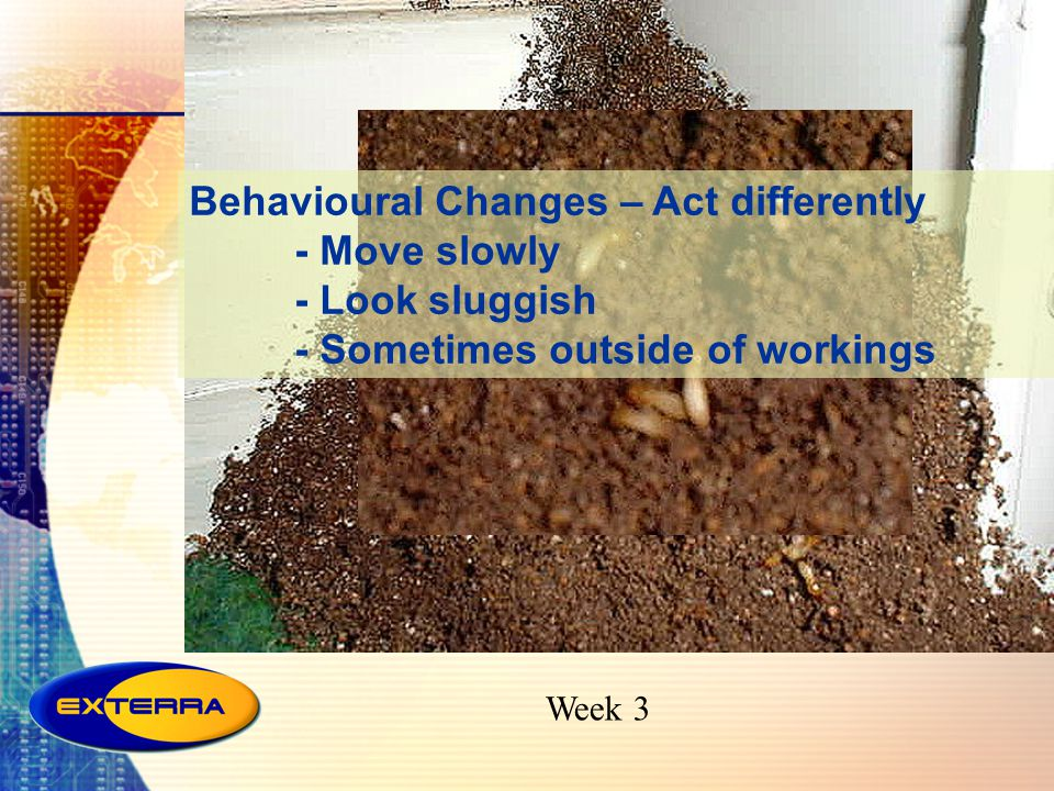 Behavioural Changes – Act differently - Move slowly - Look sluggish - Sometimes outside of workings
