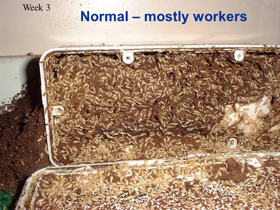 Week 3 Normal – mostly workers