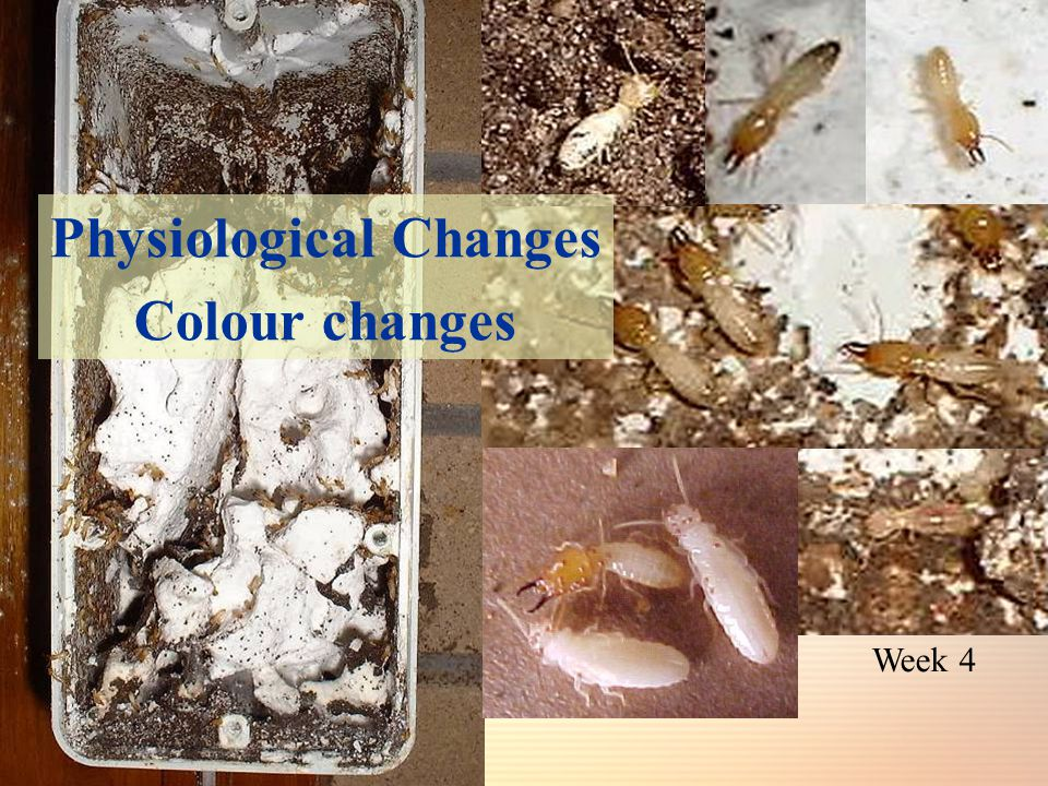 Week 4 Physiological Changes Colour changes