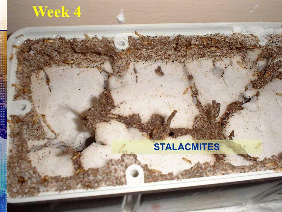 Week 4 STALACMITES