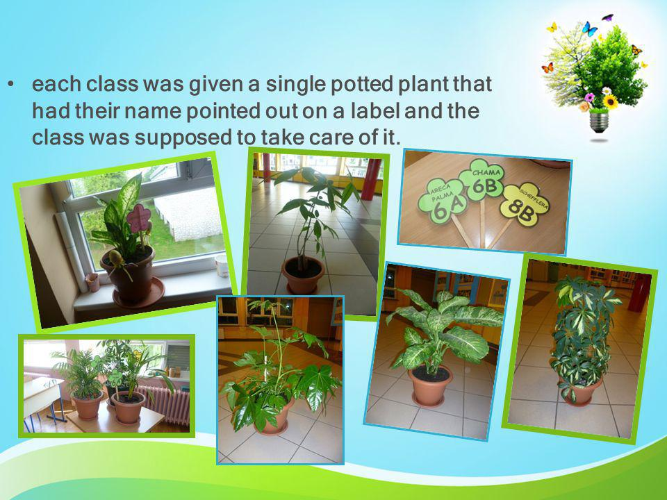 each class was given a single potted plant that had their name pointed out on a label and the class was supposed to take care of it.