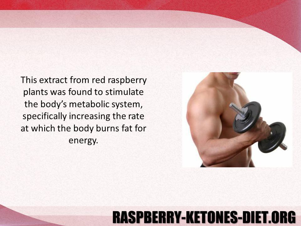 This extract from red raspberry plants was found to stimulate the bodys metabolic system, specifically increasing the rate at which the body burns fat for energy.