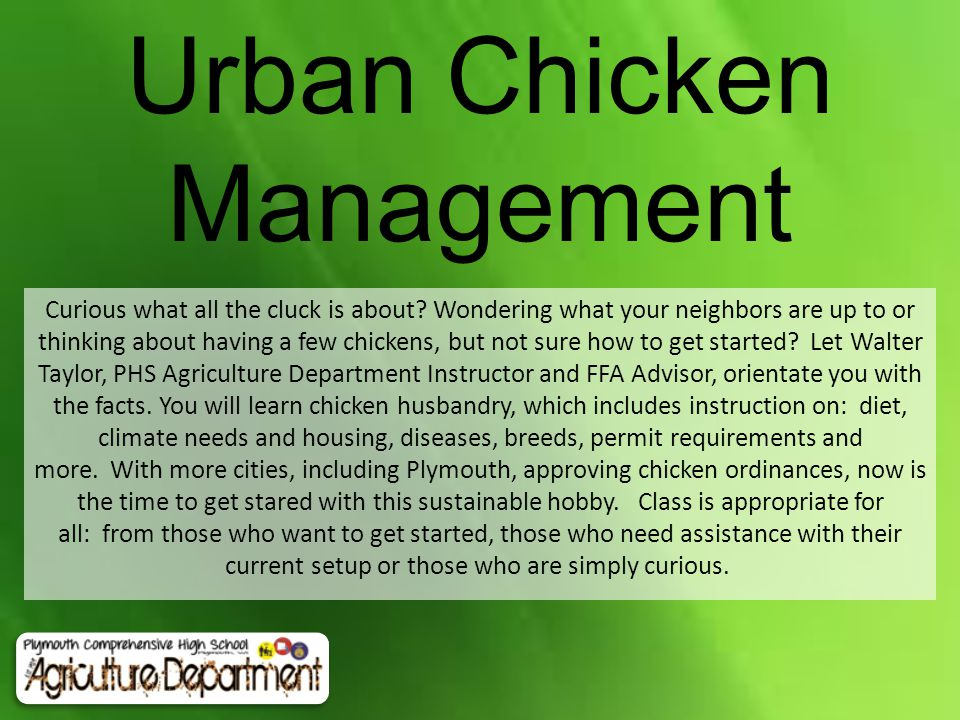 Urban Chicken Management Curious what all the cluck is about? Wondering what your neighbors are up to or thinking about having a few chickens, but not