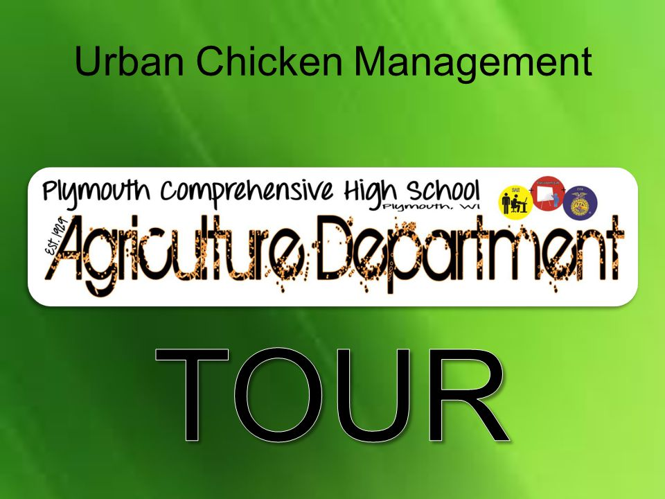 Urban Chicken Management