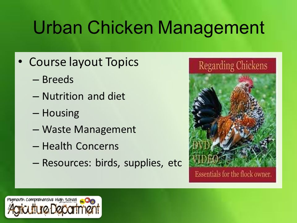 Course layout Topics – Breeds – Nutrition and diet – Housing – Waste Management – Health Concerns – Resources: birds, supplies, etc