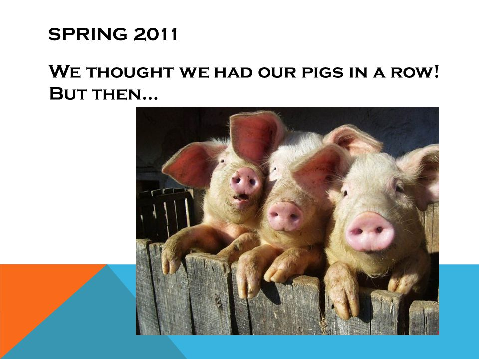 SPRING 2011 We thought we had our pigs in a row! But then…