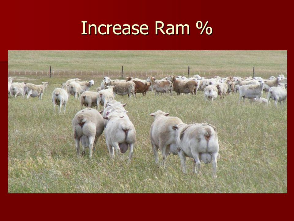 Increase Ram %