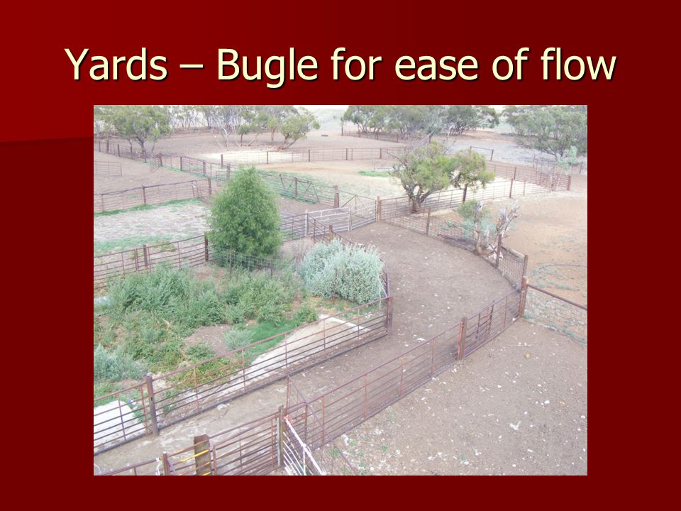 Yards – Bugle for ease of flow