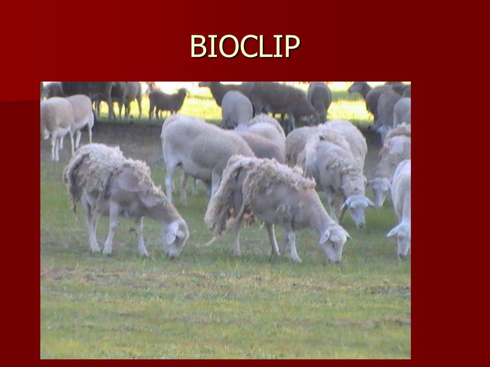 BIOCLIP