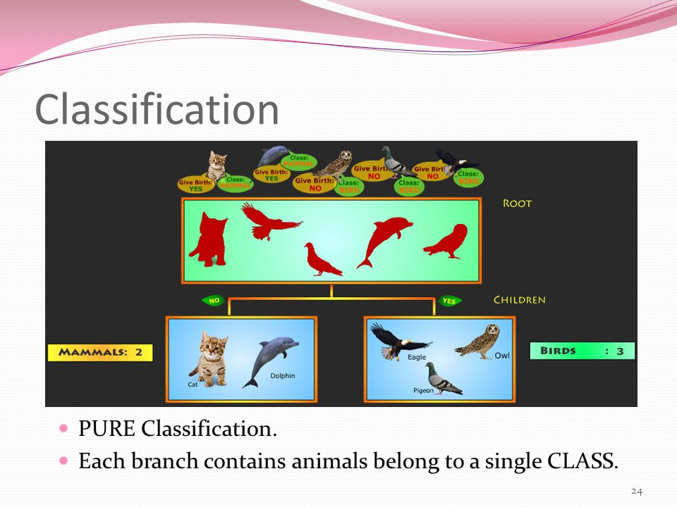 Classification 24 PURE Classification. Each branch contains animals belong to a single CLASS.
