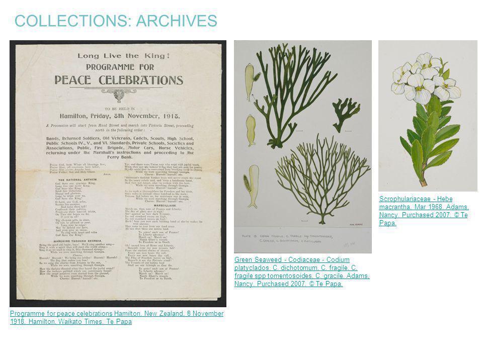 COLLECTIONS: ARCHIVES Programme for peace celebrations Hamilton, New Zealand, 8 November 1918, Hamilton. Waikato Times. Te Papa Scrophulariaceae - Heb