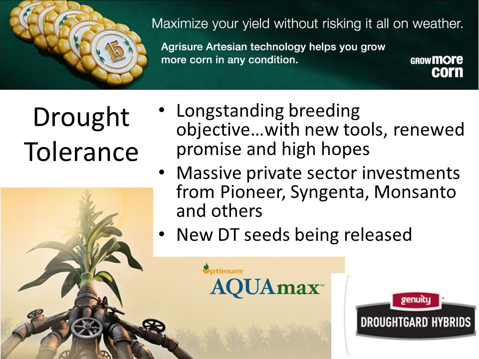 Drought Tolerance Longstanding breeding objective…with new tools, renewed promise and high hopes Massive private sector investments from Pioneer, Syngenta, Monsanto and others New DT seeds being released