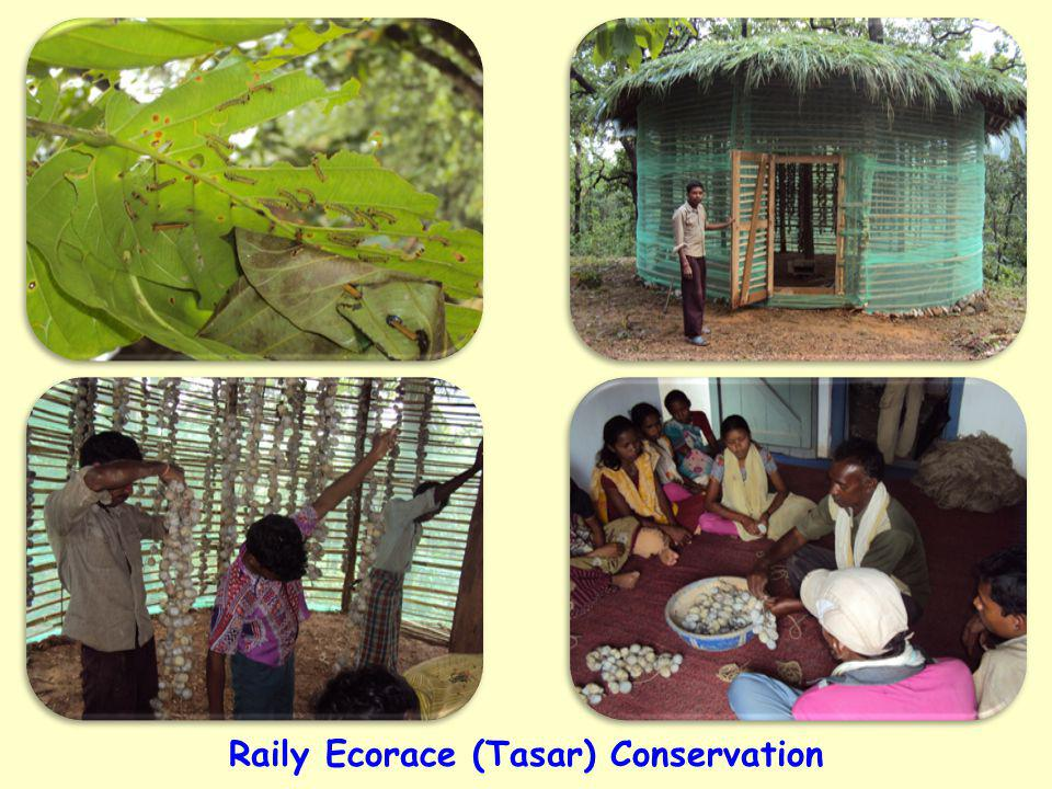 Raily Ecorace (Tasar) Conservation