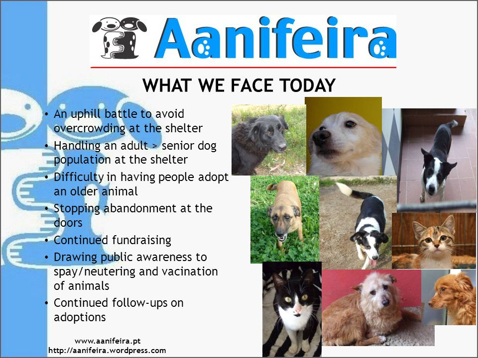 WHAT WE FACE TODAY An uphill battle to avoid overcrowding at the shelter Handling an adult > senior dog population at the shelter Difficulty in having people adopt an older animal Stopping abandonment at the doors Continued fundraising Drawing public awareness to spay/neutering and vacination of animals Continued follow-ups on adoptions www.aanifeira.pt http://aanifeira.wordpress.com