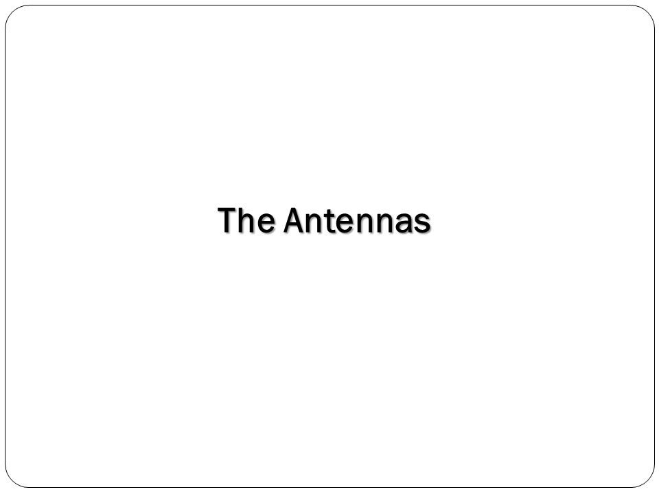 The Antennas