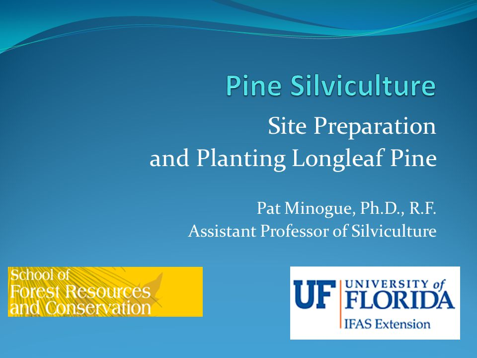 Site Preparation and Planting Longleaf Pine Pat Minogue, Ph.D., R.F. Assistant Professor of Silviculture