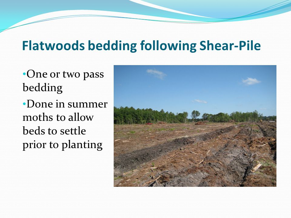 Flatwoods bedding following Shear-Pile One or two pass bedding Done in summer moths to allow beds to settle prior to planting