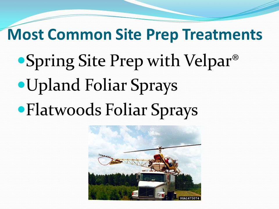 Most Common Site Prep Treatments Spring Site Prep with Velpar® Upland Foliar Sprays Flatwoods Foliar Sprays