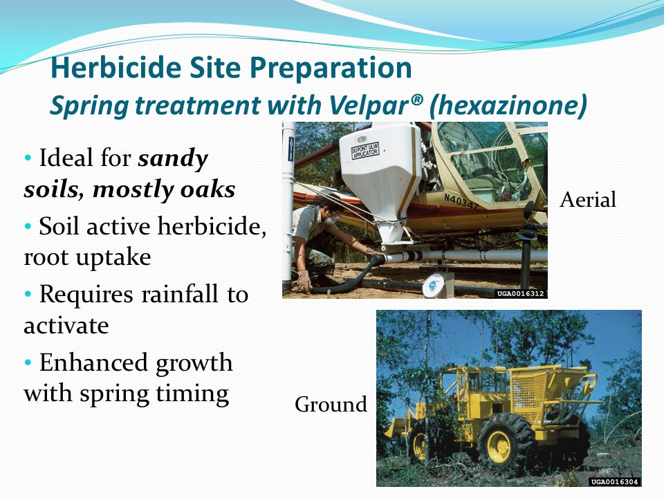 Herbicide Site Preparation Spring treatment with Velpar® (hexazinone) Ideal for sandy soils, mostly oaks Soil active herbicide, root uptake Requires r