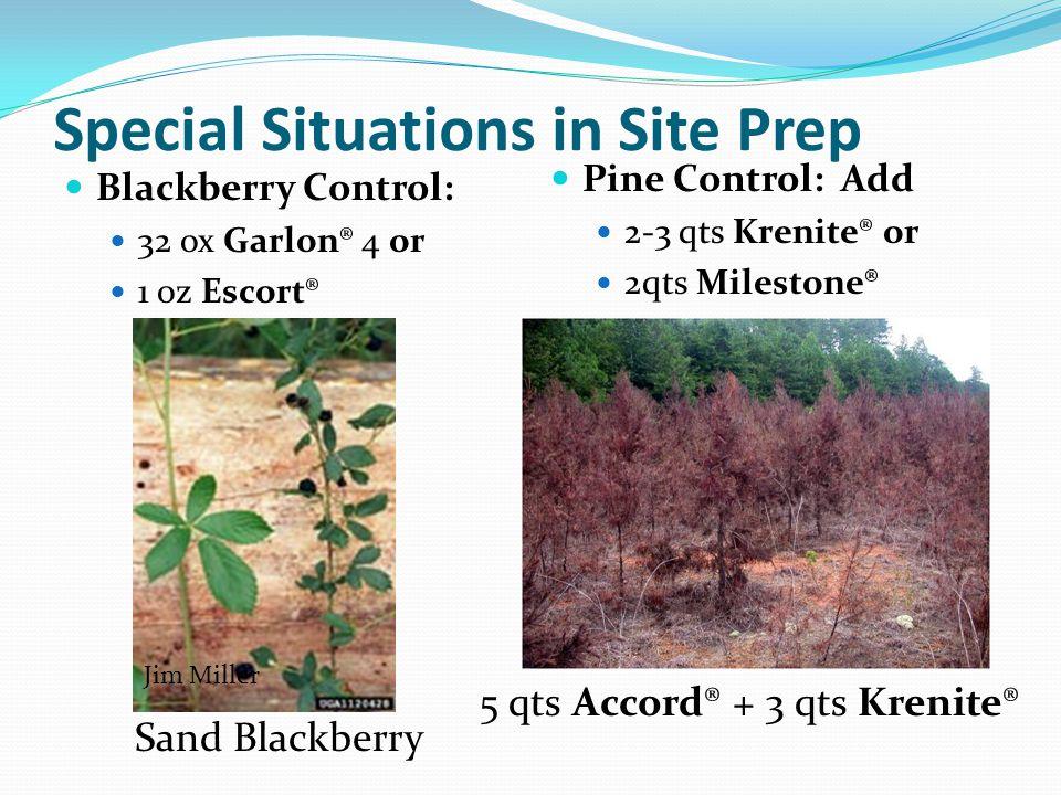 Special Situations in Site Prep Blackberry Control: 32 ox Garlon® 4 or 1 oz Escort® Pine Control: Add 2-3 qts Krenite® or 2qts Milestone® Sand Blackbe