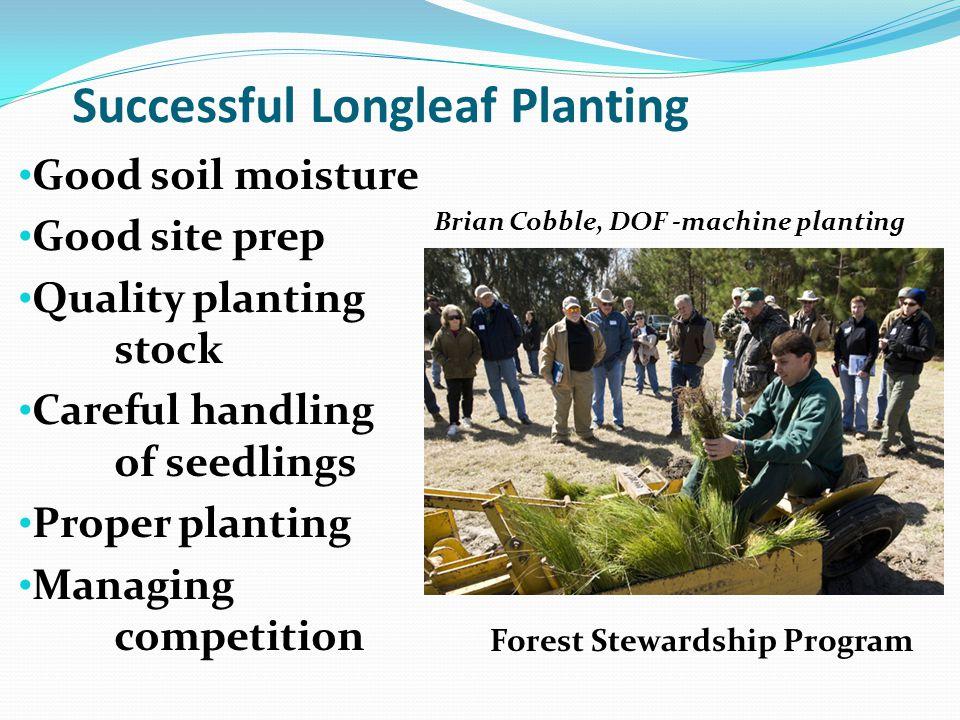 Successful Longleaf Planting Good soil moisture Good site prep Quality planting stock Careful handling of seedlings Proper planting Managing competiti