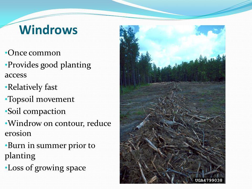 Windrows Once common Provides good planting access Relatively fast Topsoil movement Soil compaction Windrow on contour, reduce erosion Burn in summer