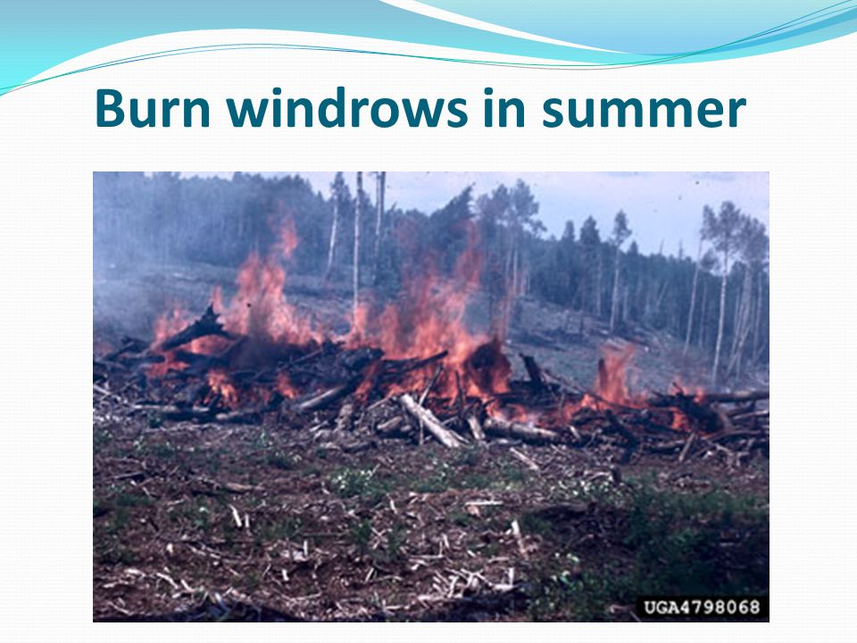 Burn windrows in summer