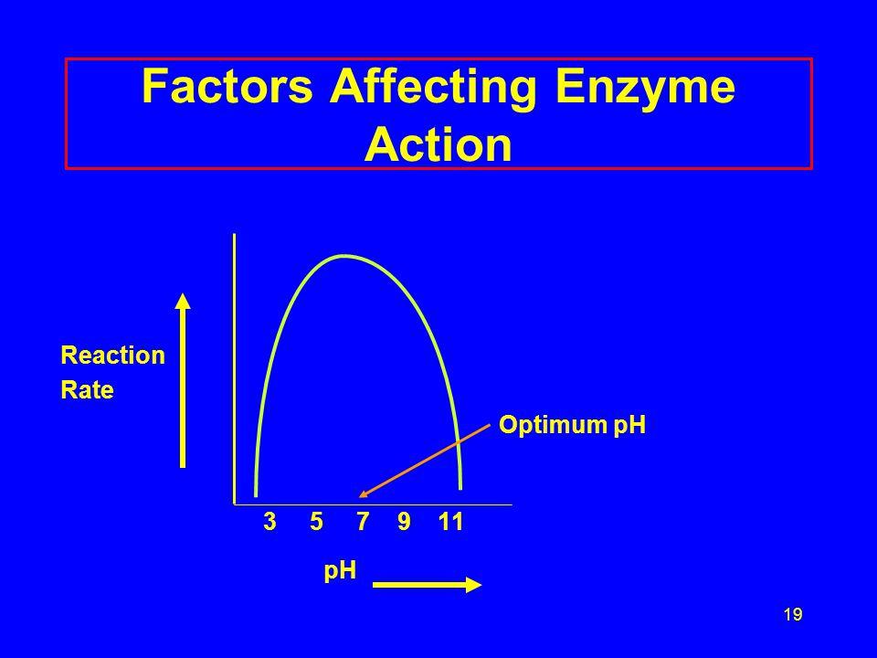 19 Factors Affecting Enzyme Action Reaction Rate Optimum pH 3 5 7 9 11 pH