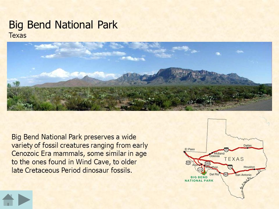 Big Bend National Park Texas Big Bend National Park preserves a wide variety of fossil creatures ranging from early Cenozoic Era mammals, some similar in age to the ones found in Wind Cave, to older late Cretaceous Period dinosaur fossils.