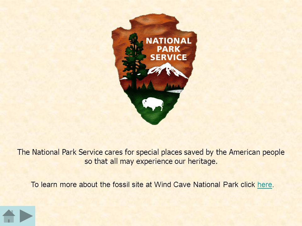 The National Park Service cares for special places saved by the American people so that all may experience our heritage. To learn more about the fossi