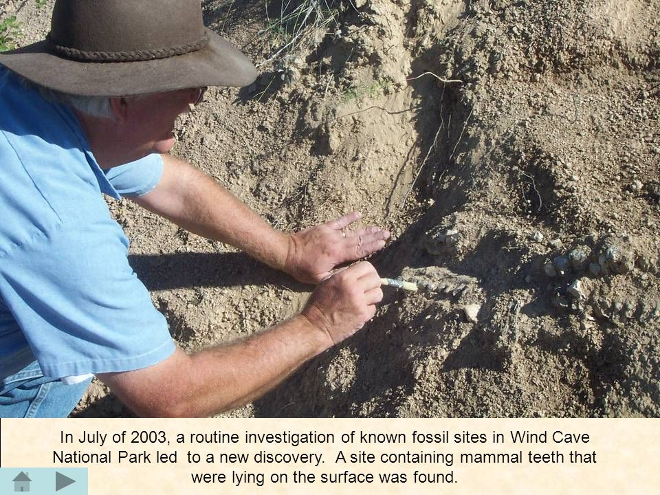 In July of 2003, a routine investigation of known fossil sites in Wind Cave National Park led to a new discovery. A site containing mammal teeth that