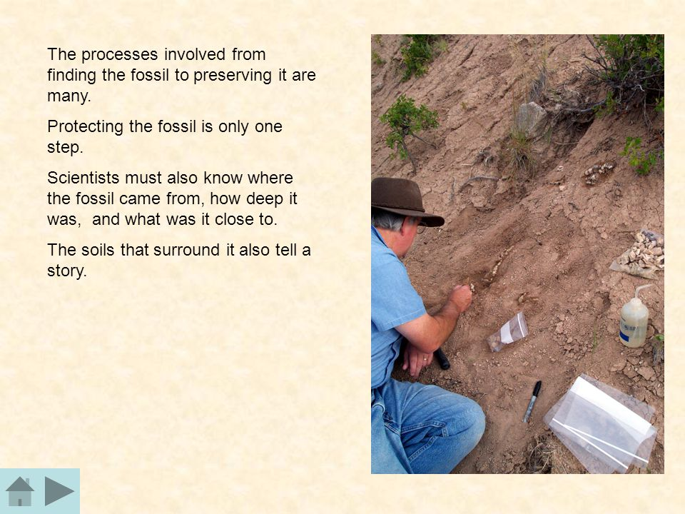 The processes involved from finding the fossil to preserving it are many.