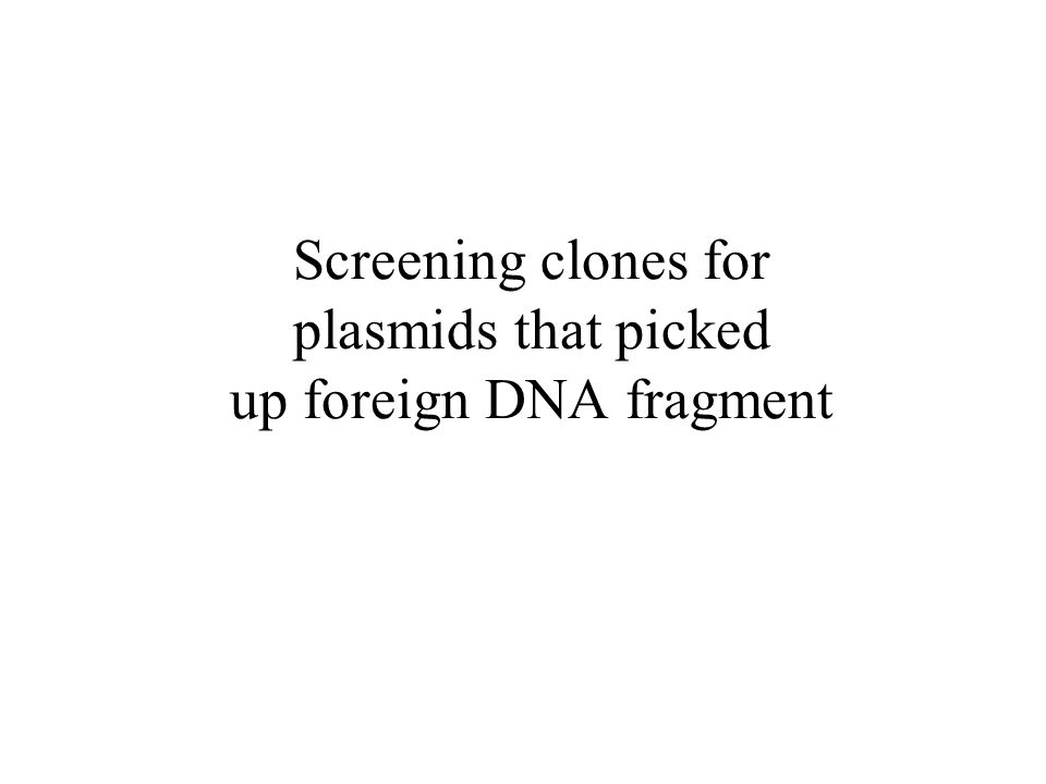 Screening clones for plasmids that picked up foreign DNA fragment