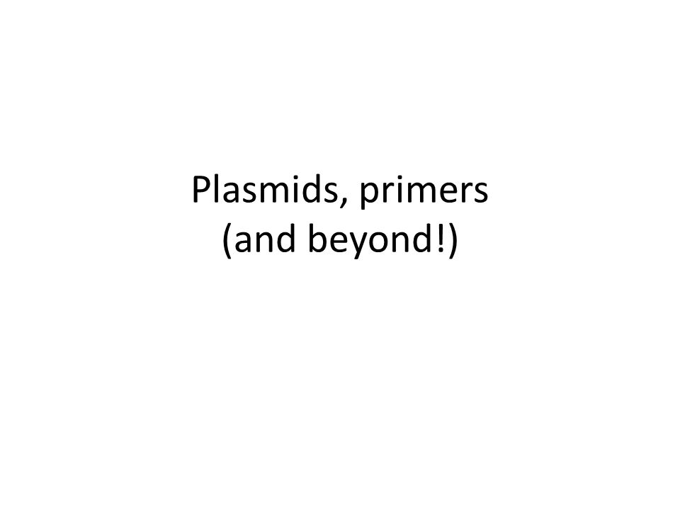 Plasmids, primers (and beyond!)